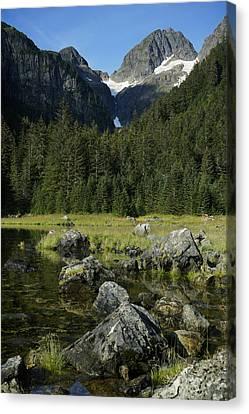 Conifer Forest Inside Passage Prince Canvas Print