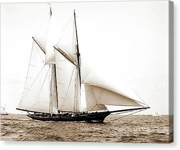 Constellation, Constellation Schooner, Yachts Canvas Print