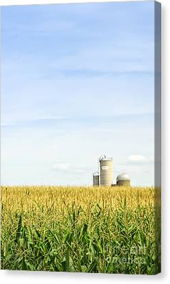 Corn Field With Silos Canvas Print by Elena Elisseeva