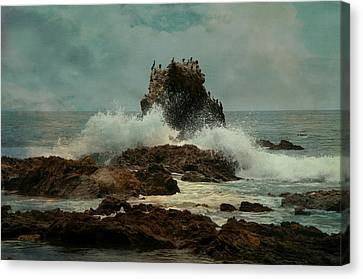 Corona Del Mar Canvas Print by Carolyn Dalessandro