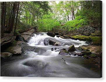 Cotton Hollow Canvas Print