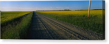 Country Road Passing Through A Field Canvas Print