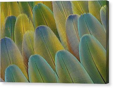 Camelot Canvas Print - Covert Wing Feathers Of The Camelot by Darrell Gulin