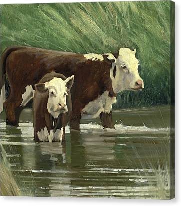 Cows In The Pond Canvas Print by John Reynolds