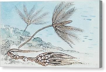 Crinoid Canvas Print