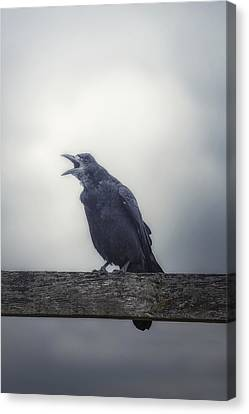 Creepy Canvas Print - Crow by Joana Kruse