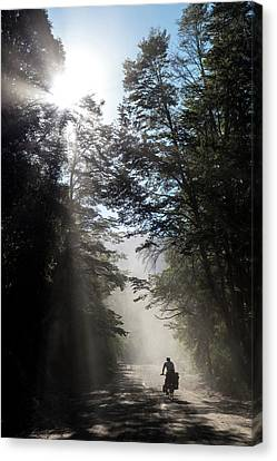 Cyclist On Dusty Road An Early Morning Canvas Print by Birgit Ryningen