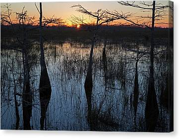 Bromeliad Canvas Print - Cypress Swamp At Sunrise by Jim West