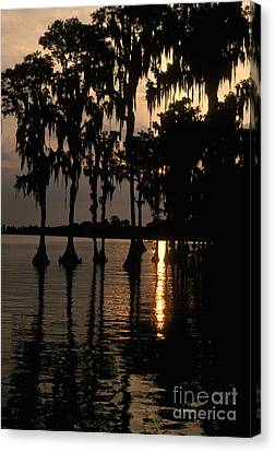 Cypress Swamp Canvas Print by Ron Sanford