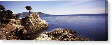 Cypress Tree At The Coast, The Lone Canvas Print