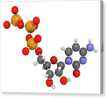 Cytidine Triphosphate Molecule Canvas Print by Molekuul