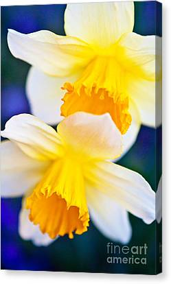 Canvas Print featuring the photograph Daffodils by Roselynne Broussard