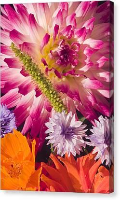 Dahlia Zinnia Bachelor's Buttons Flowers Canvas Print