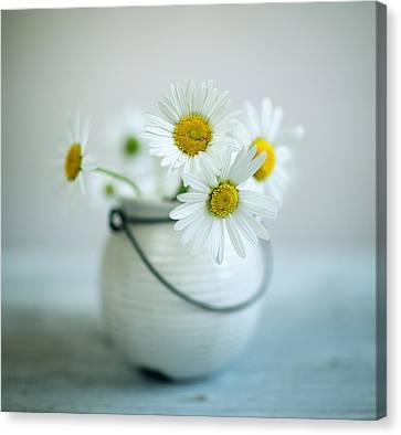 Daisy Flowers Canvas Print by Nailia Schwarz