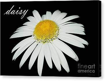 Daisy Canvas Print by MaryJane Armstrong