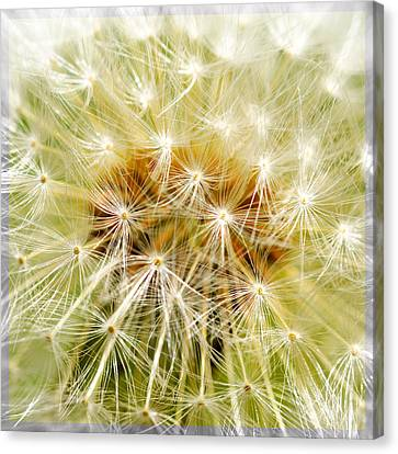 Dandelion Canvas Print by Tommytechno Sweden