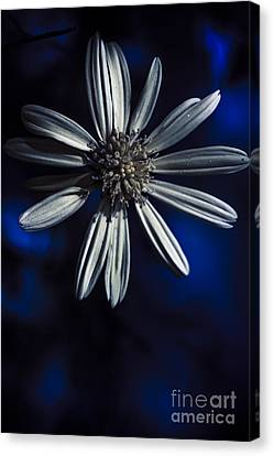 Close Focus Floral Canvas Print - Dark Blue Daisy Blossoming In A Romantic Twilight  by Jorgo Photography - Wall Art Gallery