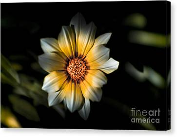 Garden Grown Canvas Print - Dark Daisy Flower by Jorgo Photography - Wall Art Gallery