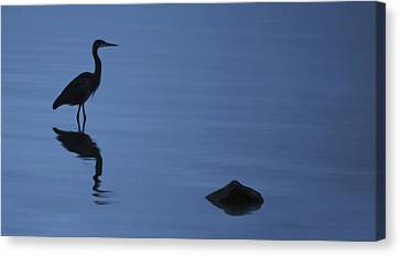 Dark Heron Canvas Print by Timothy Hack
