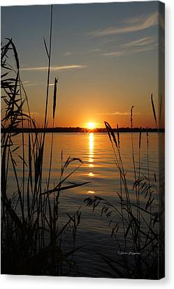 Days End Canvas Print by Steven Clipperton
