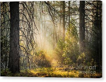 Pine Needles Canvas Print - Deep In The Forest by Jane Rix
