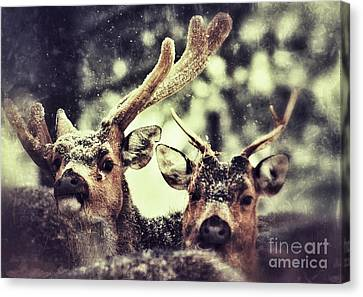 Canvas Print featuring the photograph Deer In The Snow by Nick  Biemans