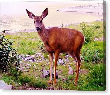Deer Visit Canvas Print by Cathy Long