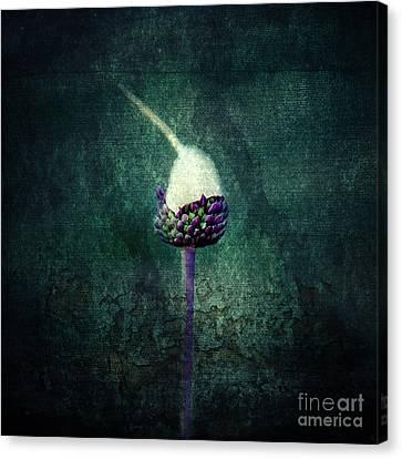 Feeding Canvas Print - Delicate by Stelios Kleanthous