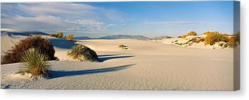 Desert Plants In A Desert, White Sands Canvas Print
