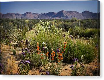 Desert Wildflowers Canvas Print by Saija  Lehtonen