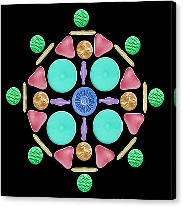 Diatoms And Radiolaria Canvas Print by Steve Gschmeissner