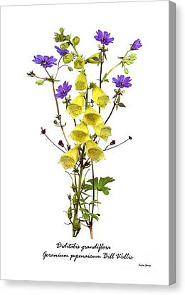 Digitalis And Geranium Canvas Print by Archie Young