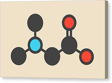 Dimethylglycine Molecule Canvas Print by Molekuul