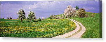 Dirt Road Through Meadow Of Dandelions Canvas Print by Panoramic Images