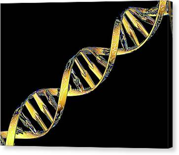 Dna Double Helix Reflecting Microarray Canvas Print