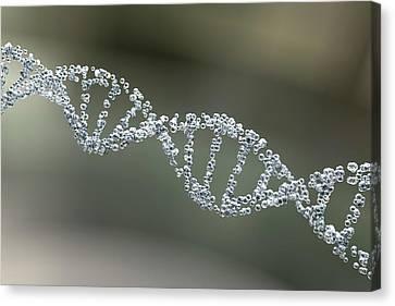 Helical Canvas Print - Dna Molecule by Kateryna Kon