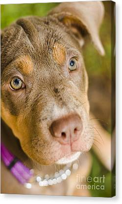 Dog Obedience Training Canvas Print by Jorgo Photography - Wall Art Gallery
