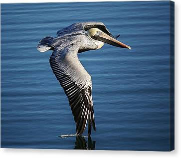Drawing A Line In The Water Canvas Print by Paulette Thomas