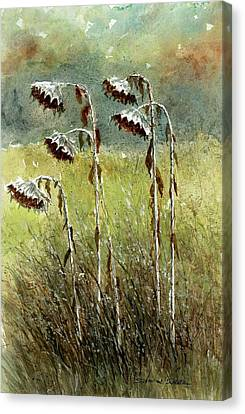 Dried Up Sunflower Patch Canvas Print by Steven Schultz
