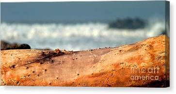 Drift Wood Canvas Print by Henrik Lehnerer