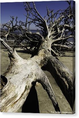 Driftwood Canvas Print by Fran Gallogly