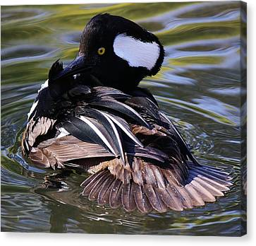 Duck Canvas Print by Paulette Thomas