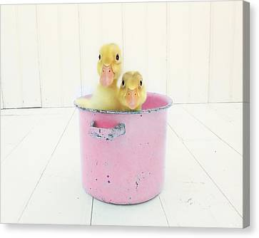 Duck Soup  Canvas Print by Amy Tyler