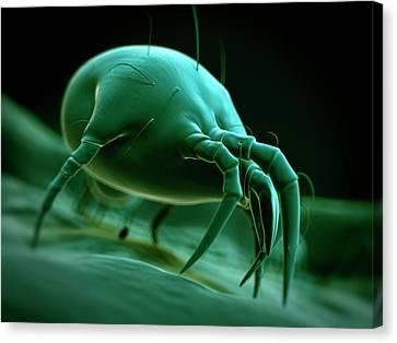 Arachnida Canvas Print - Dust Mite by Sebastian Kaulitzki