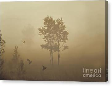 Early Morning Canaan Valley Canvas Print by Dan Friend