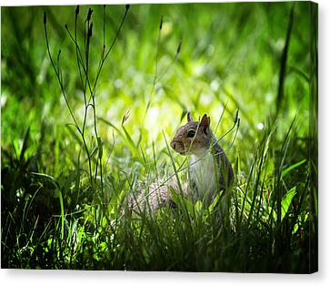 Canvas Print featuring the photograph Eastern Gray Squirrel by Zoe Ferrie