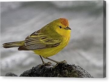 Ecuador, Galapagos Islands Canvas Print