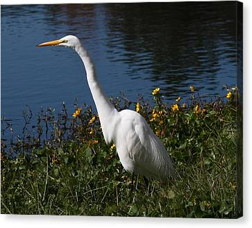 Egret In Flowers 11x14 Horiz Canvas Print