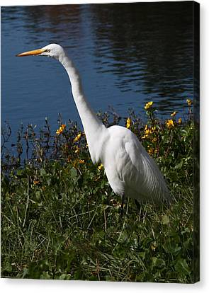 Egret In Flowers 8x10 Canvas Print