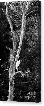 Egret Canvas Print by Steven Ralser